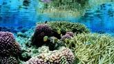srilanka-coral-reef